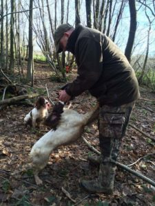 Rebelritsi gundogs, English springer spaniels