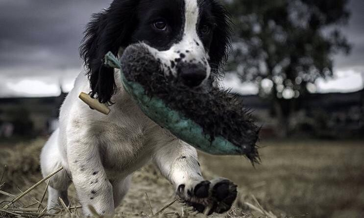 Rebelritsi gundogs