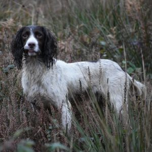 rebelritsi gundog photography